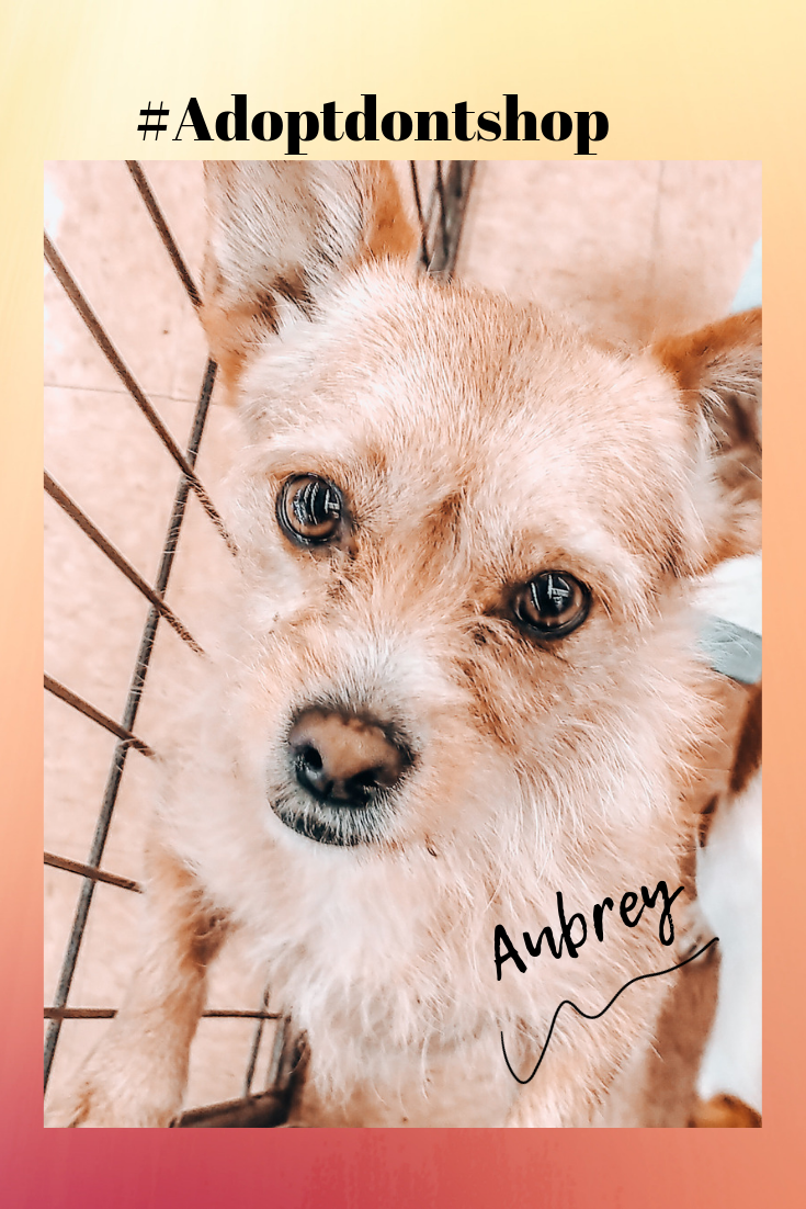 Meet Aubrey Dog Adoption Dog Friends Terrier Puppies