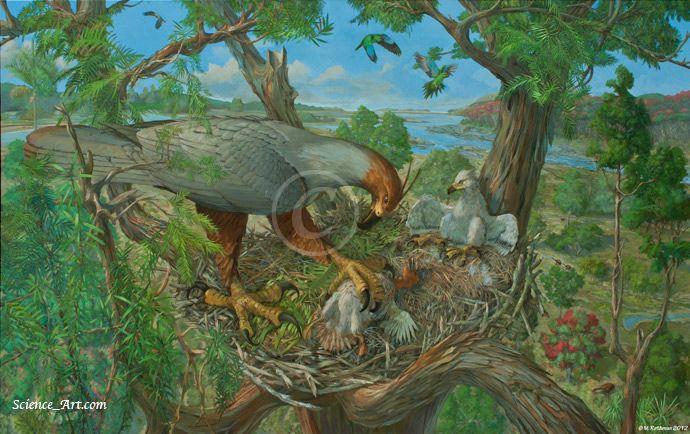 Extinct Haast's Eagle habitat illustration - Illustration ...