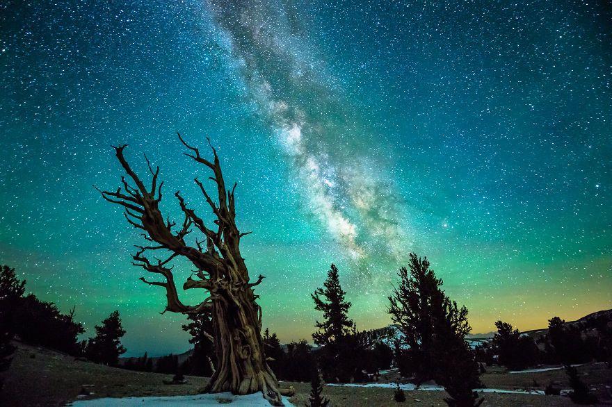 Ancient-Trees-by-Joe-Capra_jpg__880