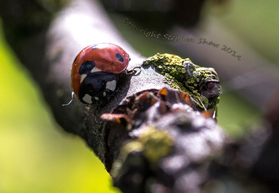 Ladybird Sanctuary by Stephen Shaw on 500px