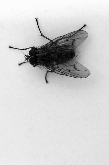 Dark Eclipse Of The Light Fly Drawing Insect Art Art Reference