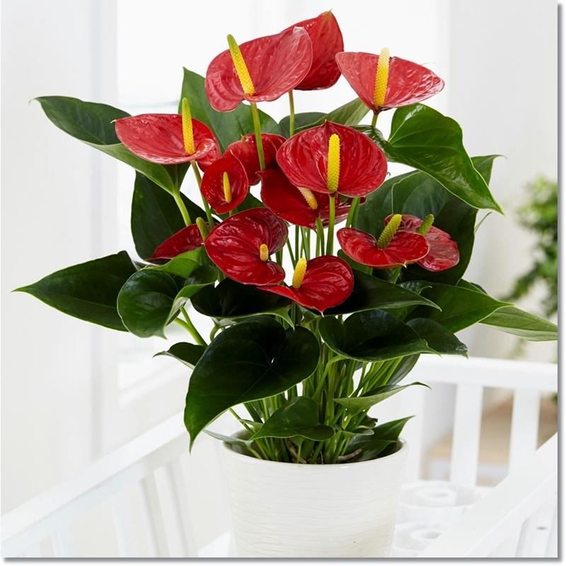 Pin On Houseplants Indoor Plants