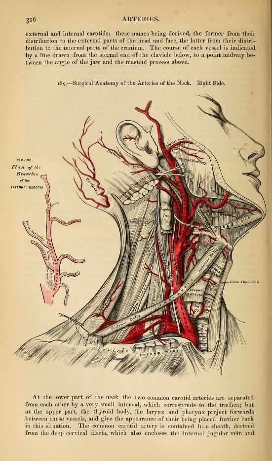 Anatomy : descriptive and surgical | Human Mechanics | Pinterest ...