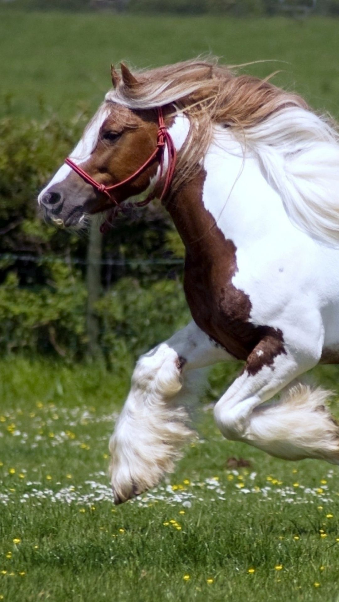 Pin on Equine Beauty