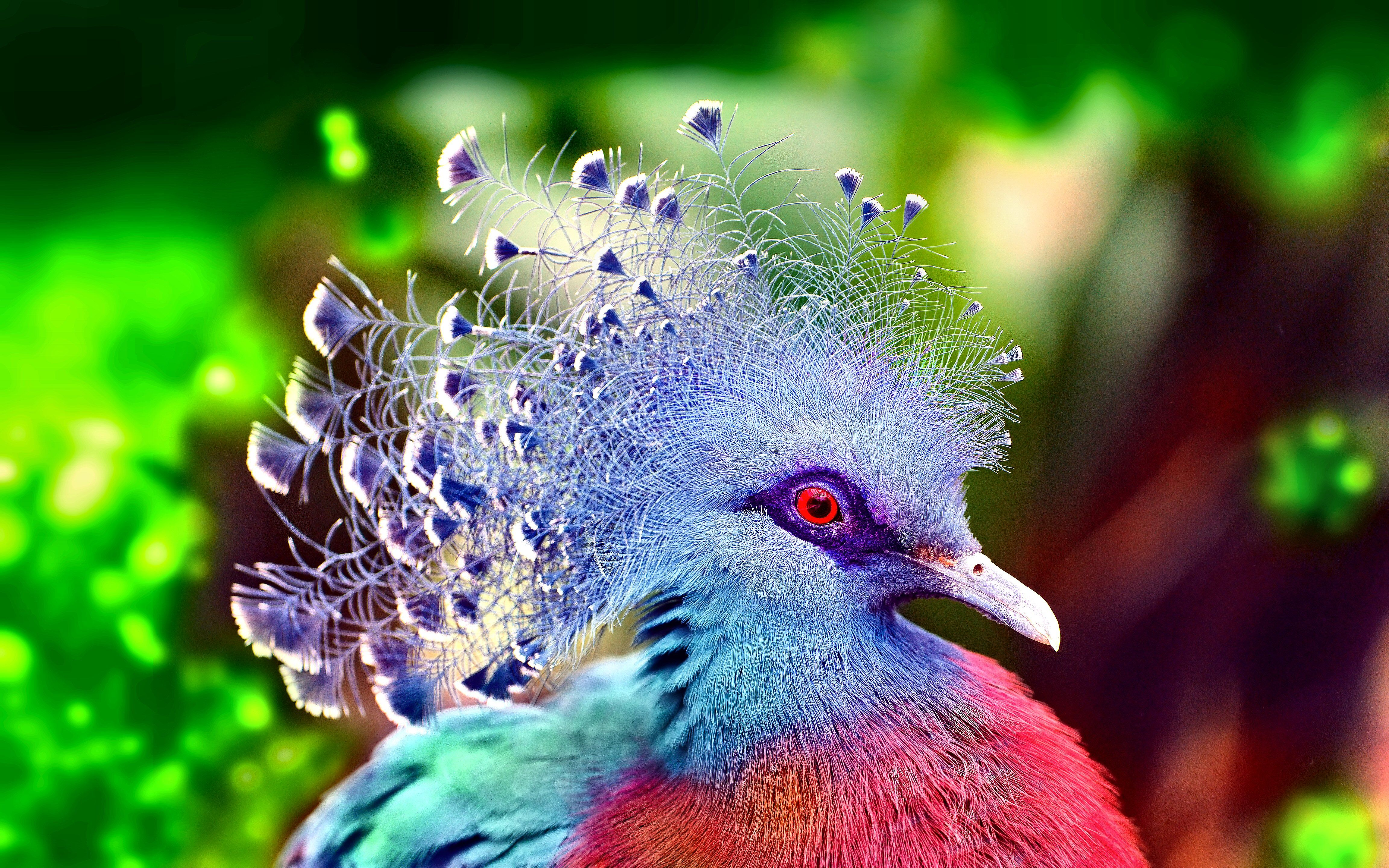 BIRD [19] coolbird [VersionOne031157] [29januari2013tuesday] Wallpaper/Background 4608 x 2880 - id: 351185 - Wallpaper Abyss