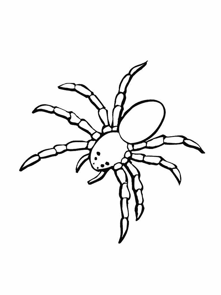 Kleurplaten Halloween Spinnen.Kleurplaat Van Een Spin Halloween Kleurplaten Tekenen En