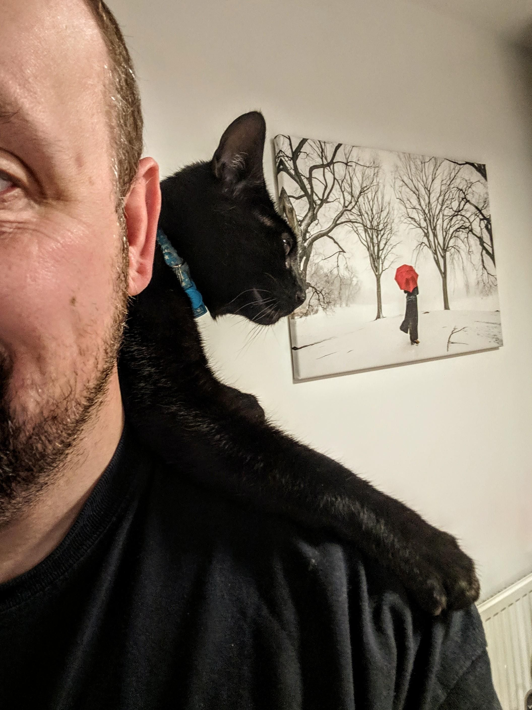 Happiness is a shouldercat! Cats musical, Mean cat, Cats