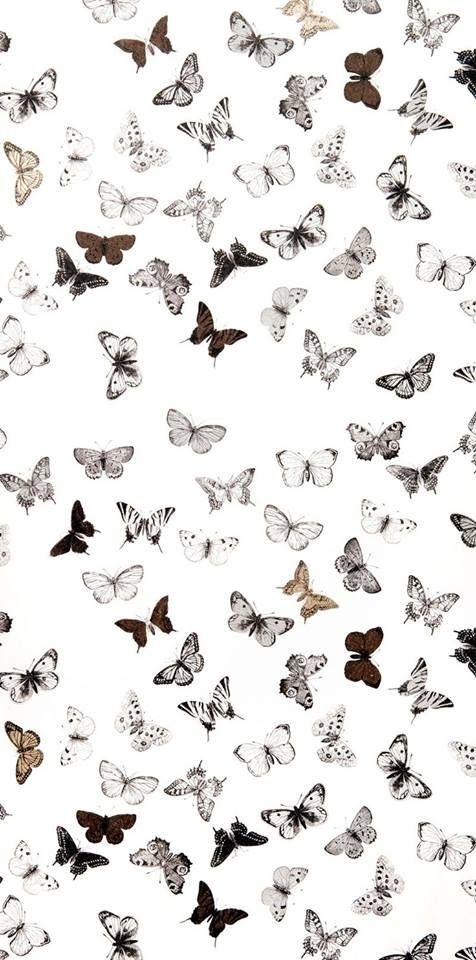 Butterfly Wallpaper Vsco White