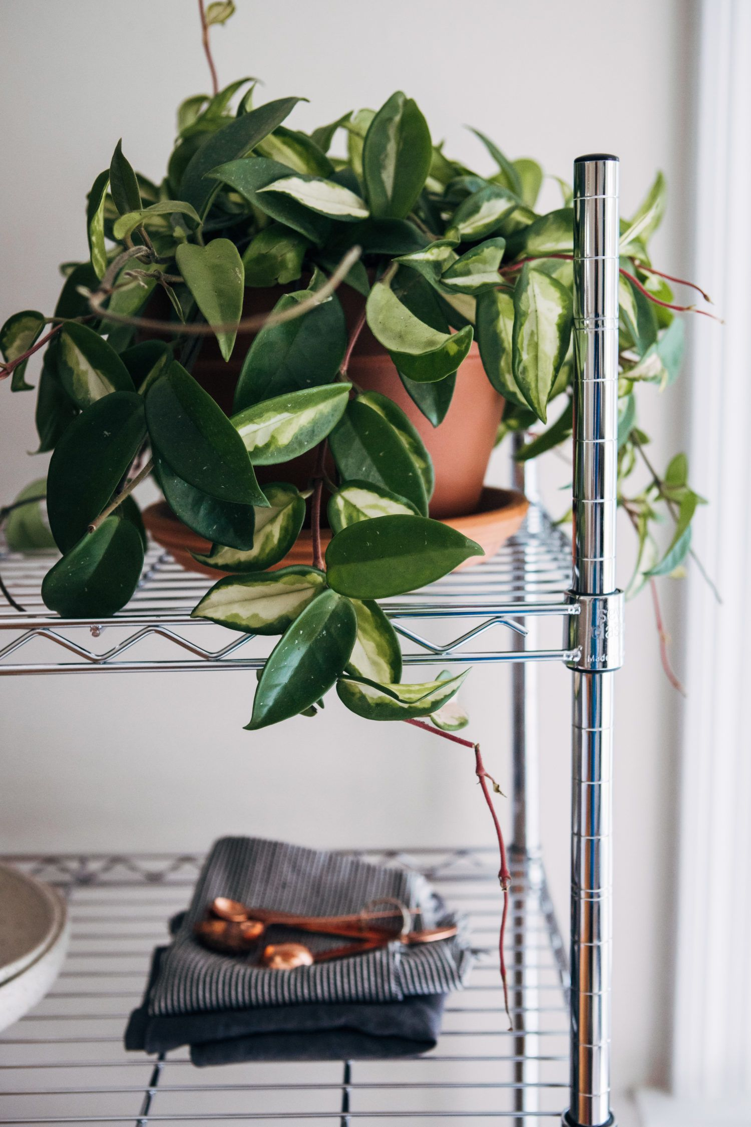 About Indoor plants, Plants, Plant aesthetic