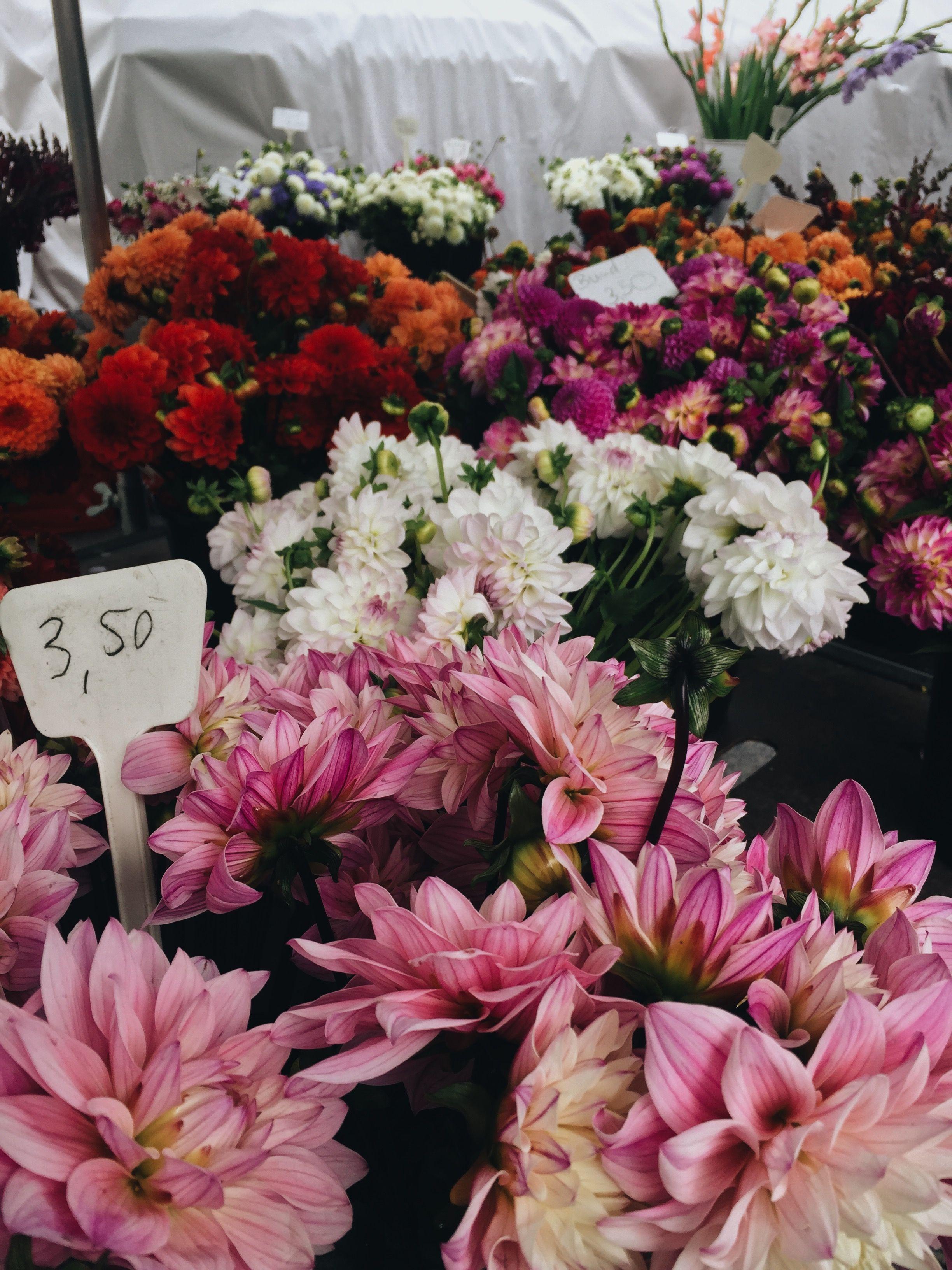 Пин от пользователя Mary Trotsko на доске Flowers