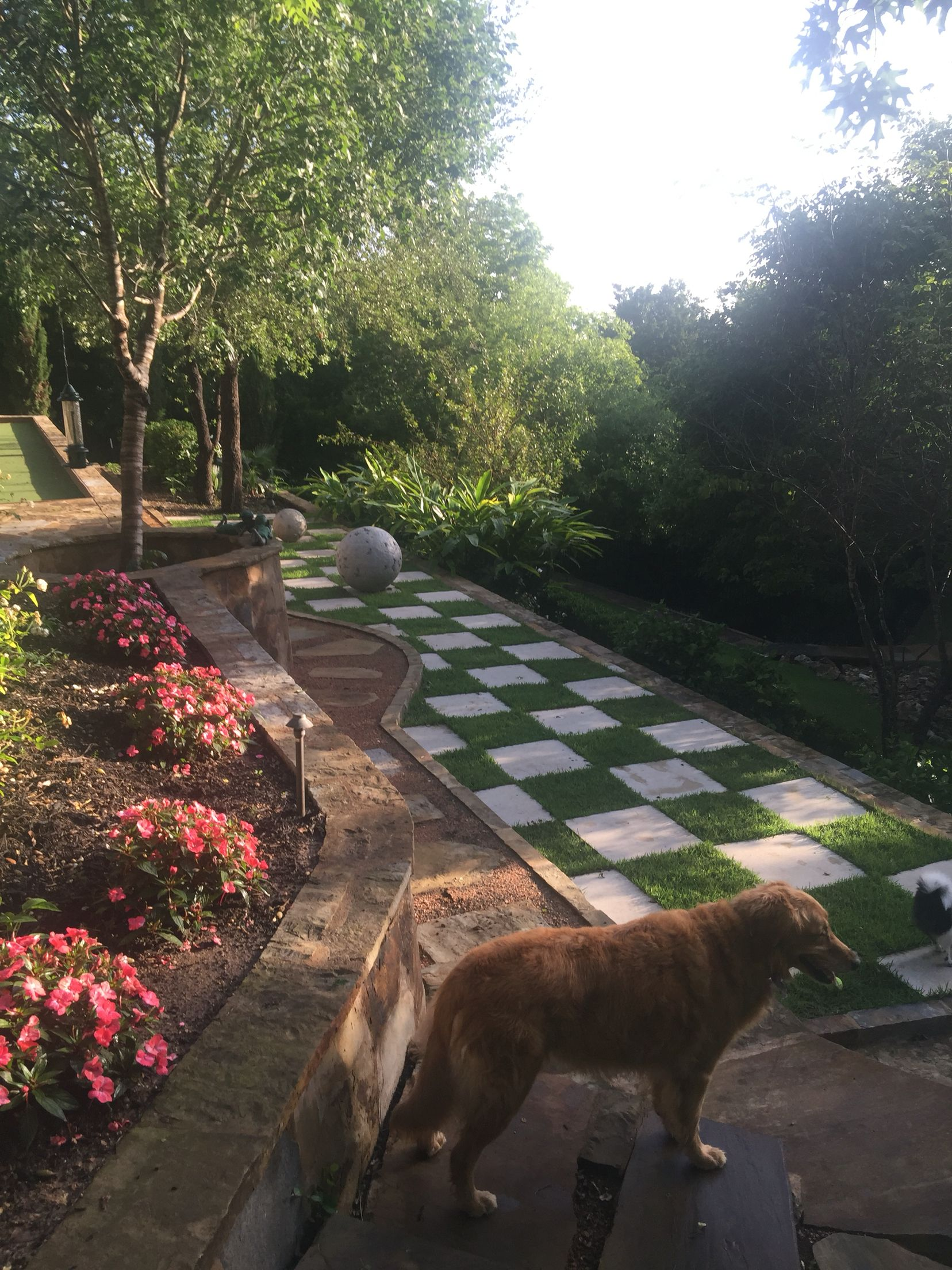 Austin, Tx. Beautiful backyard, our English Garden ...