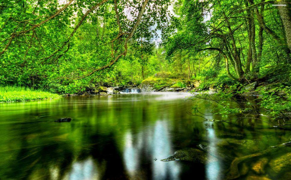 Green Summer Forest River Hd Wallpaper Forest Wallpaper Nature Desktop River Forest