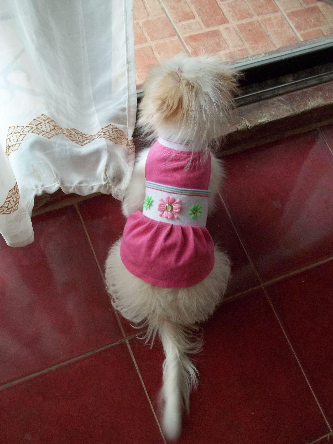 Vanilla Bean in pink Dog clothes patterns, Dog