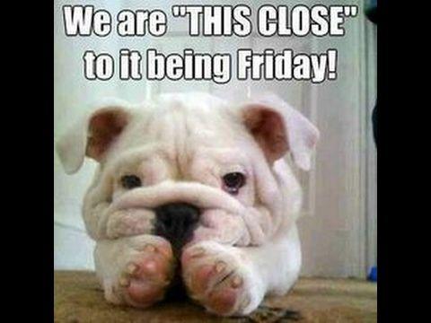 Happy Friday Eve Happy Friday Eve Dog Lovers Funny Happy Thursday