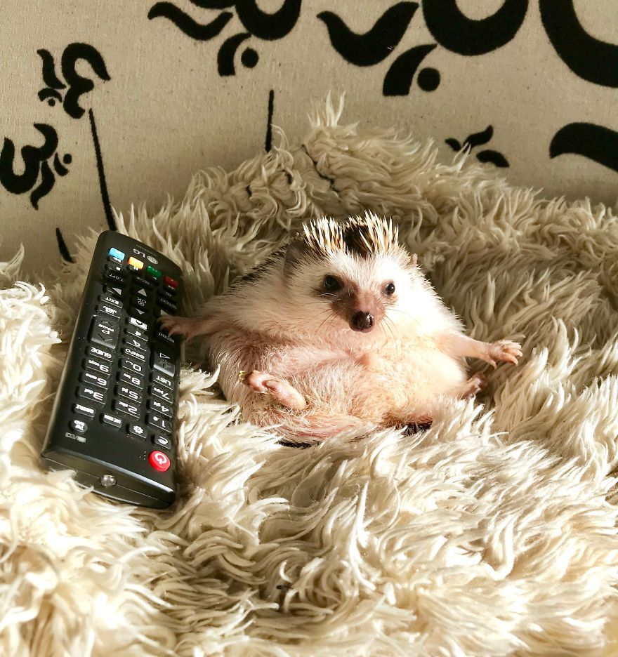 Image result for hedgehogs watching tv