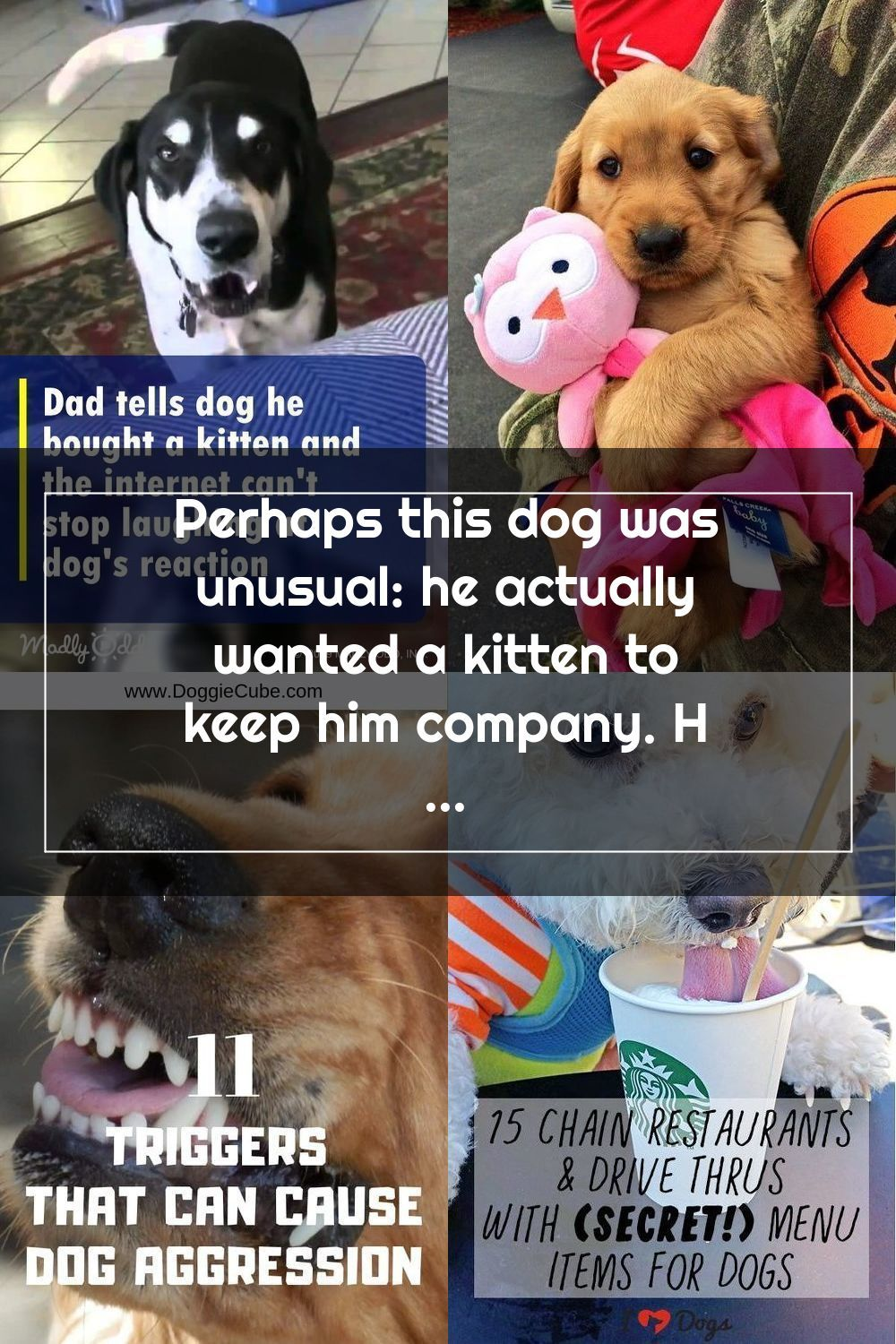 Perhaps This Dog Was Unusual He Actually Wanted A Kitten To Keep Him Compa In 2020 Dogs Aggressive Dog Kitten