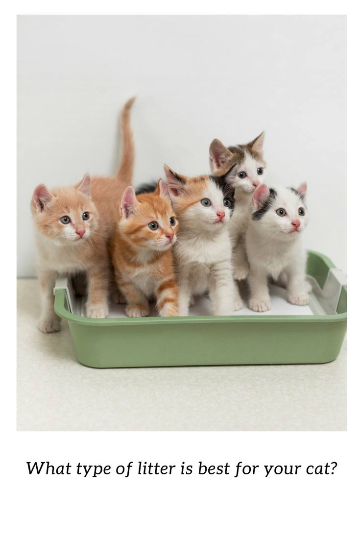 What type of litter is best for your cat? Here's a guide