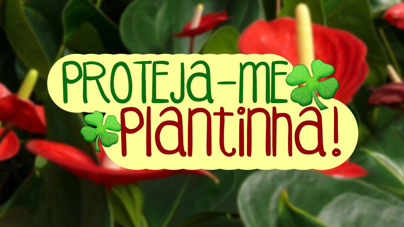 plantas para purificar e proteger a casa, feng shui e boas energias