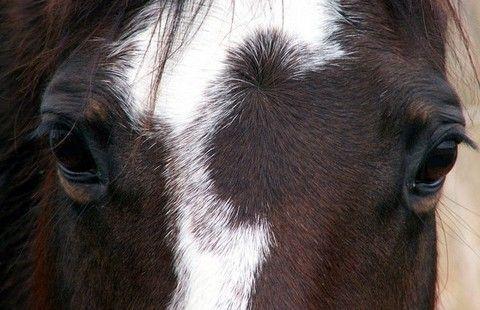 Infographic unravels horsemeat scandal