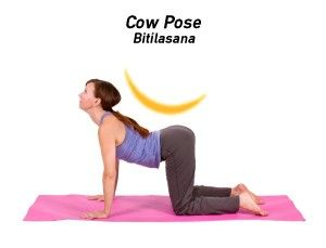 catcow is a gentle flow between two poses that warms the