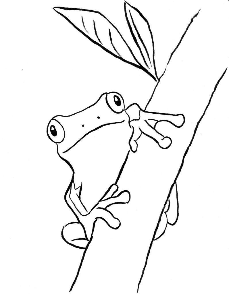 Coqui Frog Coloring Page Taken