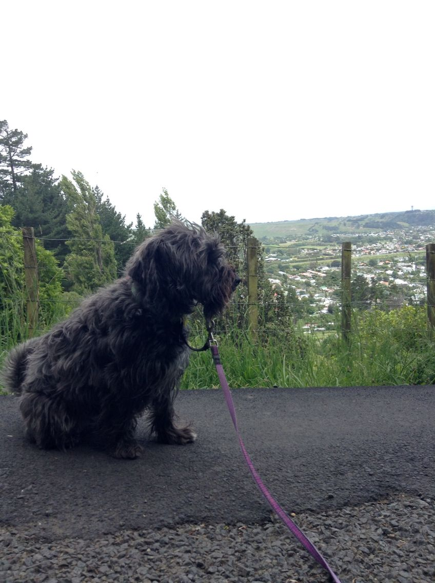 Roxy Standing In Front Of The View Point Of Wanganui Animals