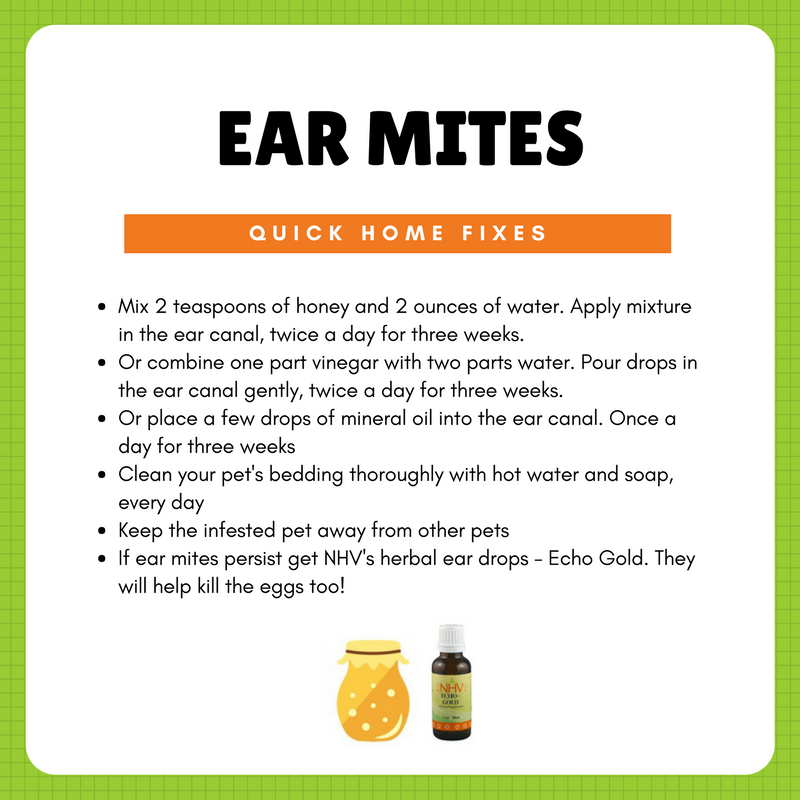 Echo Gold for cats Cat ear mites, Dogs ears infection