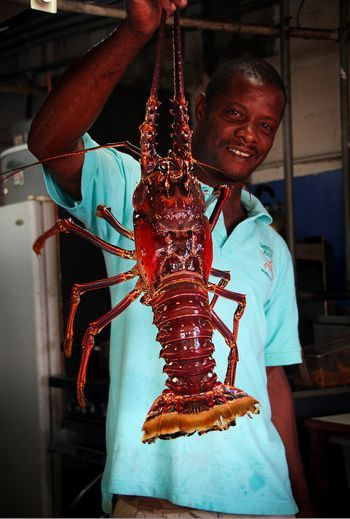Barbados lobster at Lobster Alive - http://bit.ly/GIYJFV #Caribbean #cuisine Plan your #WinterEscape in #Bluefields #Jamaica at www.lunaseainn.com