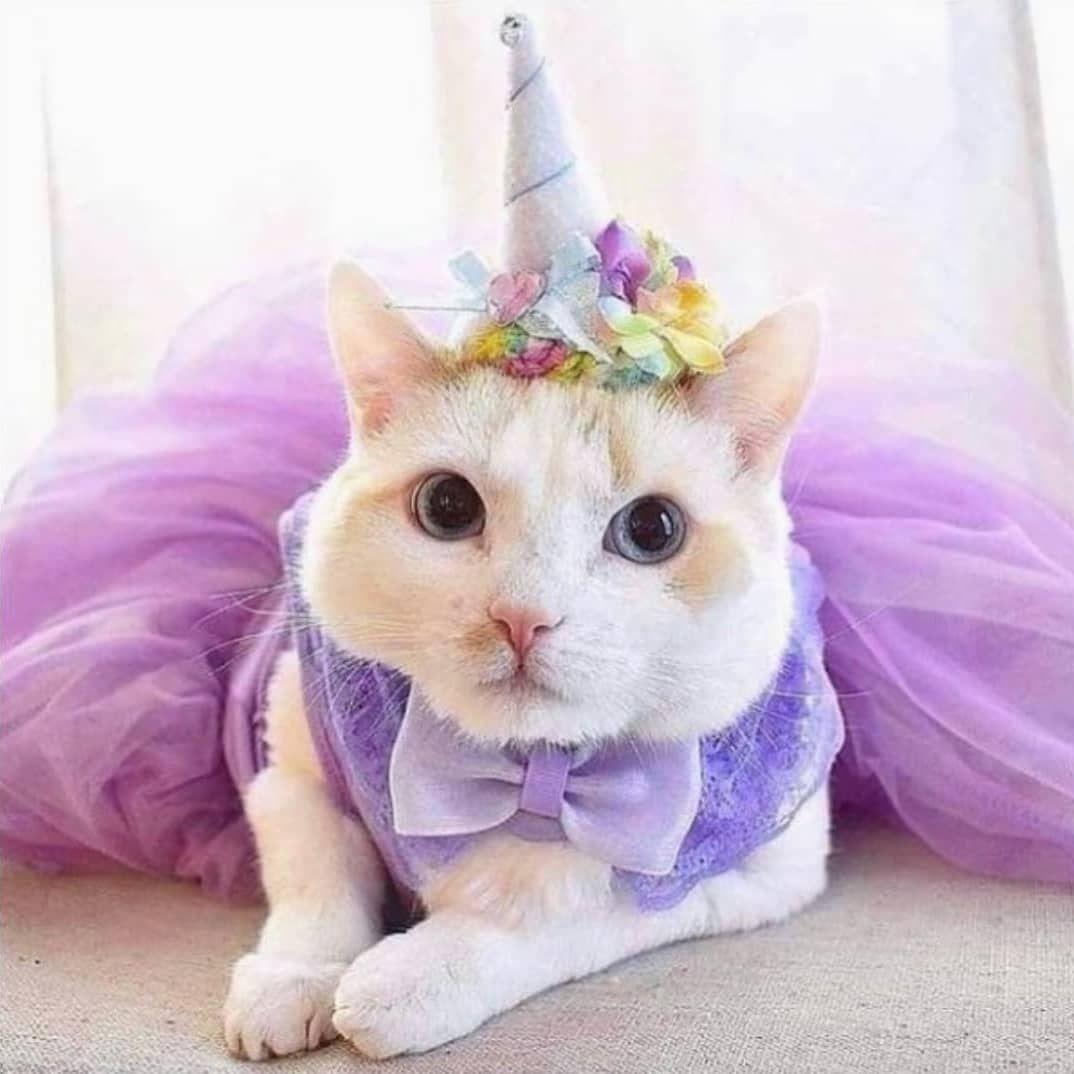 Not party related but why not?!  It's a unicat    Happy Tuesday . . . #Repost @unicornunity_  This gorgeous unicorn could smile a little more  @unicornunity_           #unicorn #fingerling #fingerlings #unicornunity #inspire #unicornlove #unicorncake #makeup #brushes #brush #unicorntoy #unicornmagic #unicornio #unicorntribe #unicornlife #unicornio #einhorn #unicornpower #unicornsquad #licorne #rainbow #unicornsarereal #worldofunicorns #love #unicornunityispower #memes #mylittlepony #rainbowdash