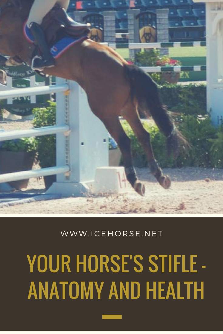 Learn more about the horse\'s stifle - the knee! https://www.icehorse ...