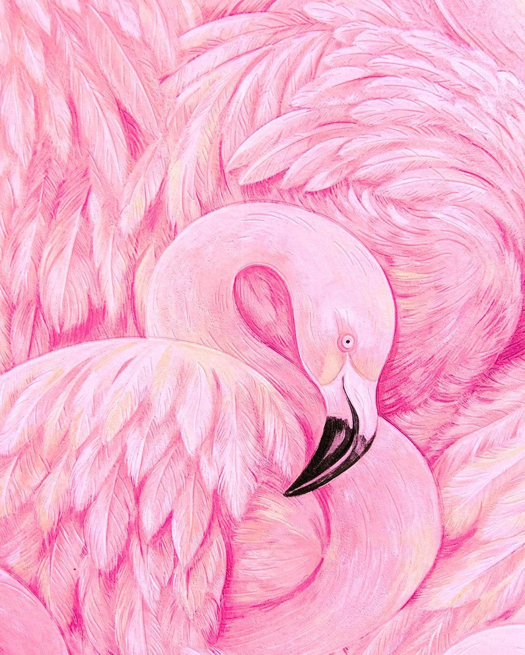 картинка розового фламинго рисунок оправдан