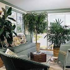 Risultati immagini per le piante più belle dentro casa