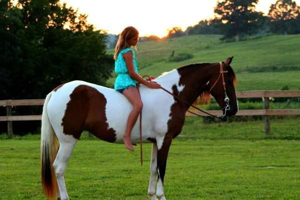 I had a childhood horse that looked like this. Never rode with a saddle. I didn't look like this gal, thought.