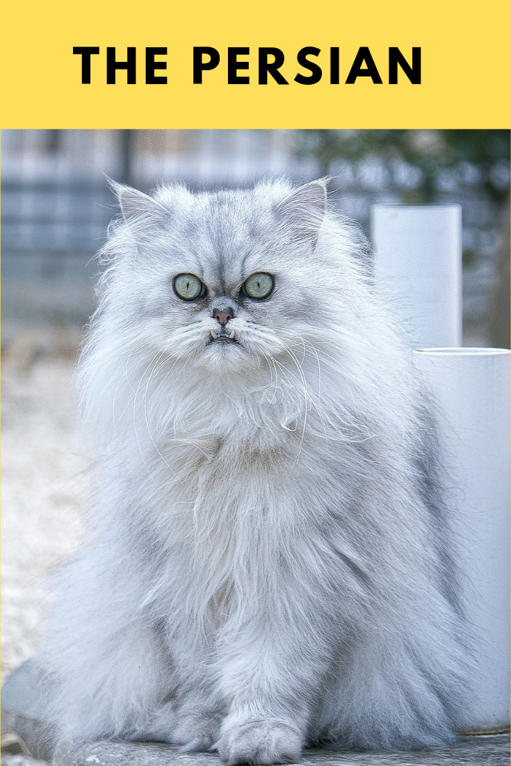 the world 10 best cats breeds Best cat breeds, Cats, Cat