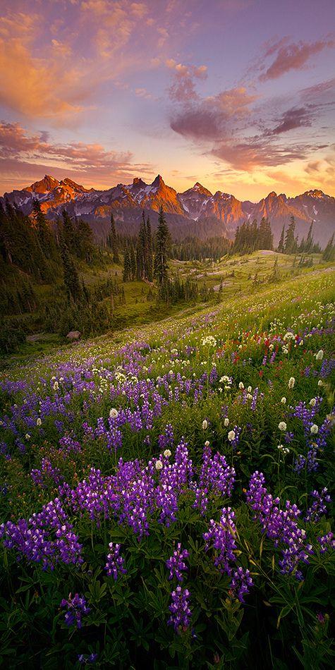 Summer Evenings at Mt. Rainier, Washington, USA-SR