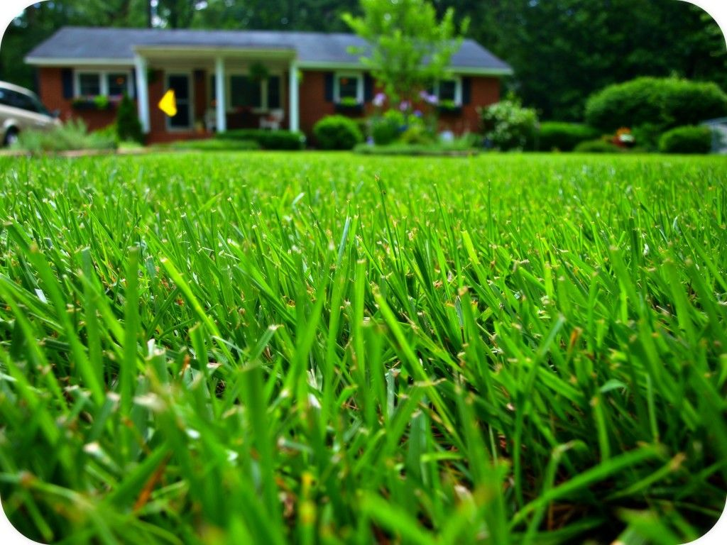 The Lazy Homeowner S Guide To A Really Green Lawn Simply Swider Green Lawn Lawn Repair Backyard