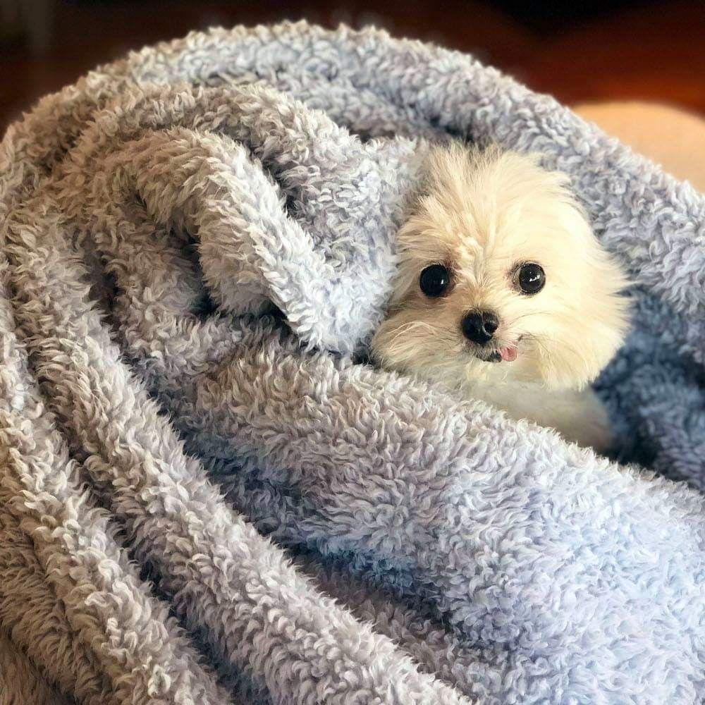 Blankies Rule Cute Dogs Puppies Cute Puppies