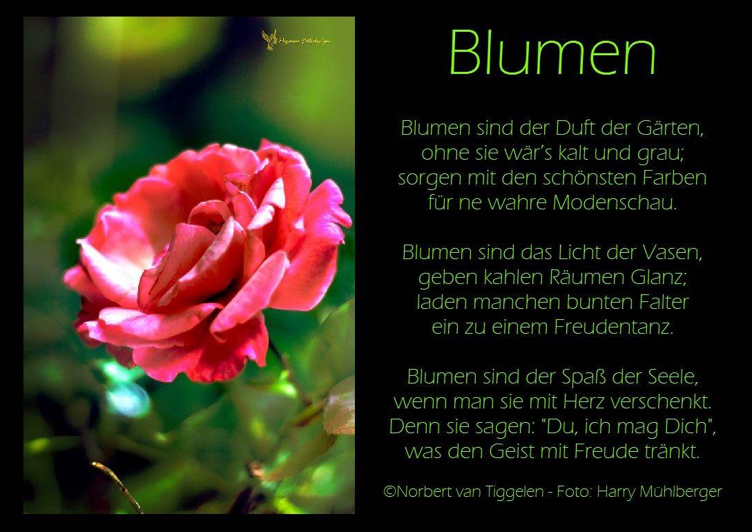 Blumen, Van Tiggelen, Gedichte, Menschen, Leben, Weisheit