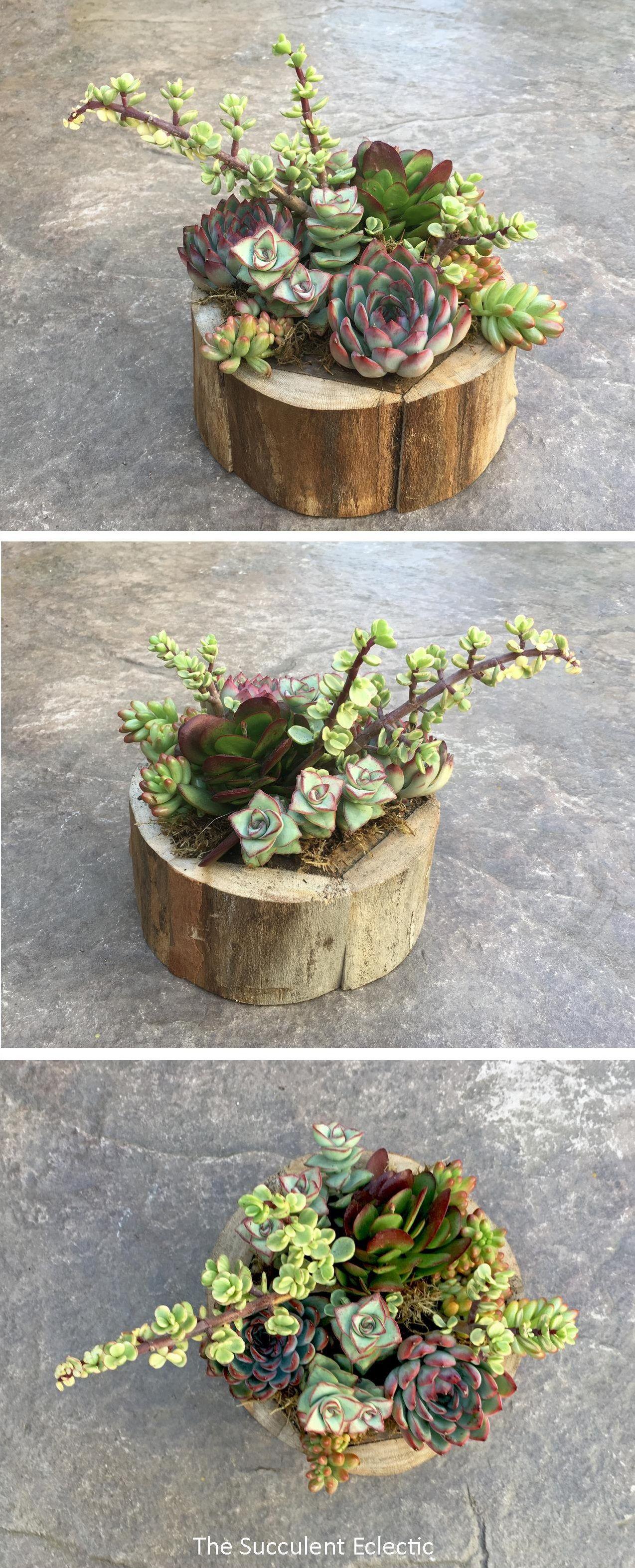 Close Planting Succulent Arrangement   The Succulent Eclectic