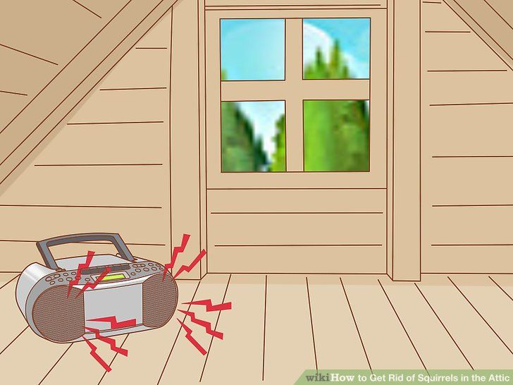3 ways to get rid of squirrels in the attic in 2020 get