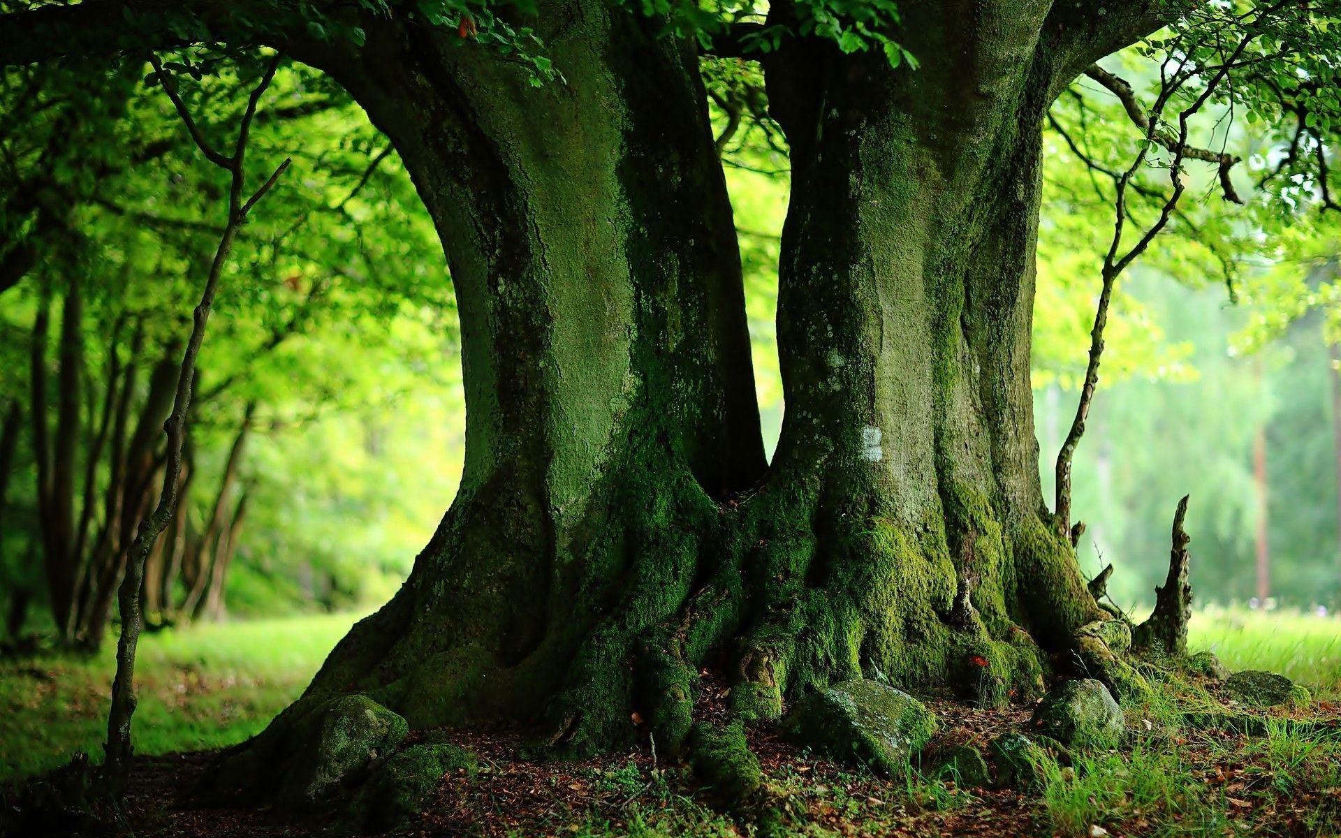 Green Landscape Tree Photography Tree Photography Wallpaper Nature Tree