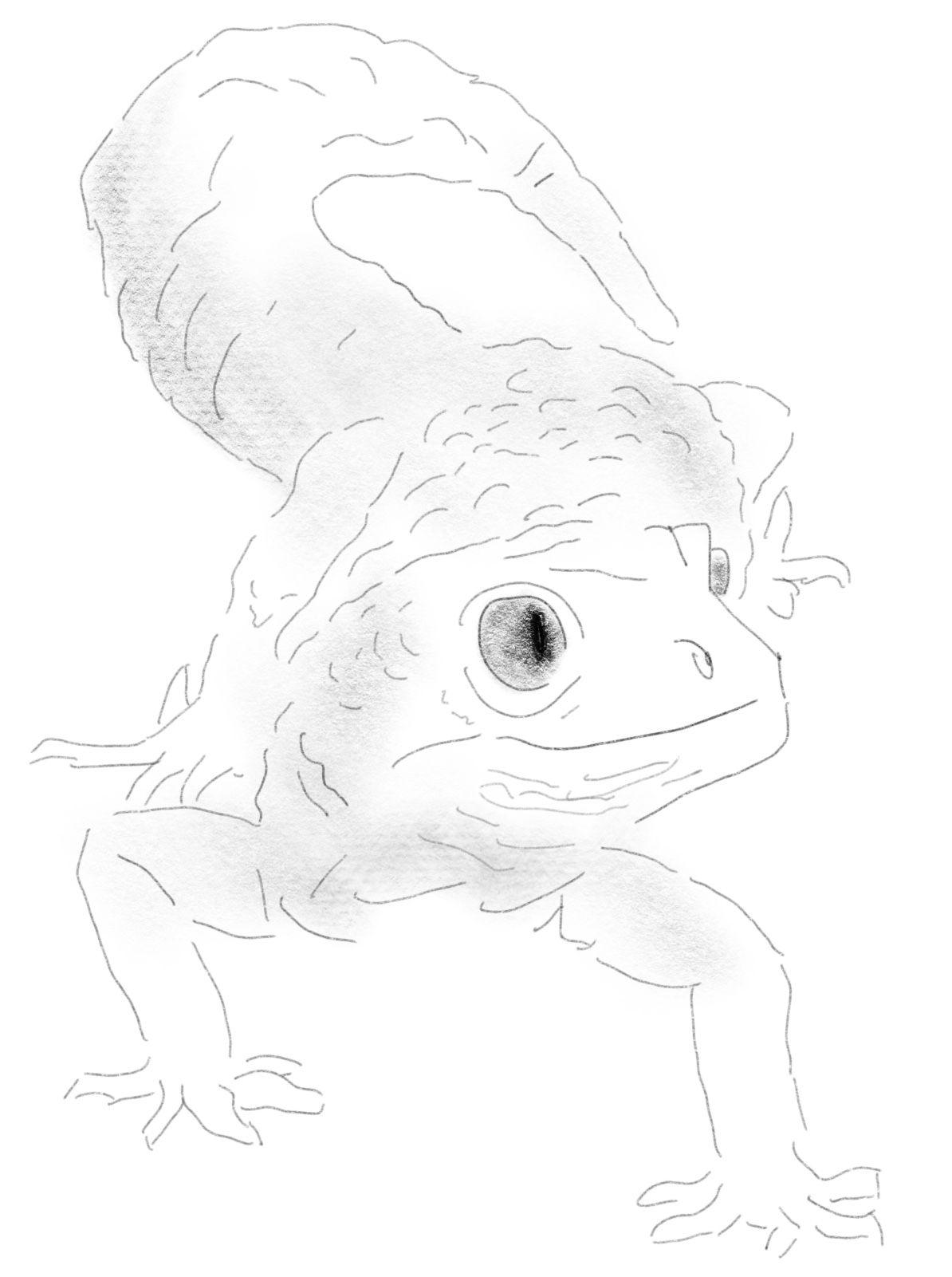 Pin On Leopard Gecko