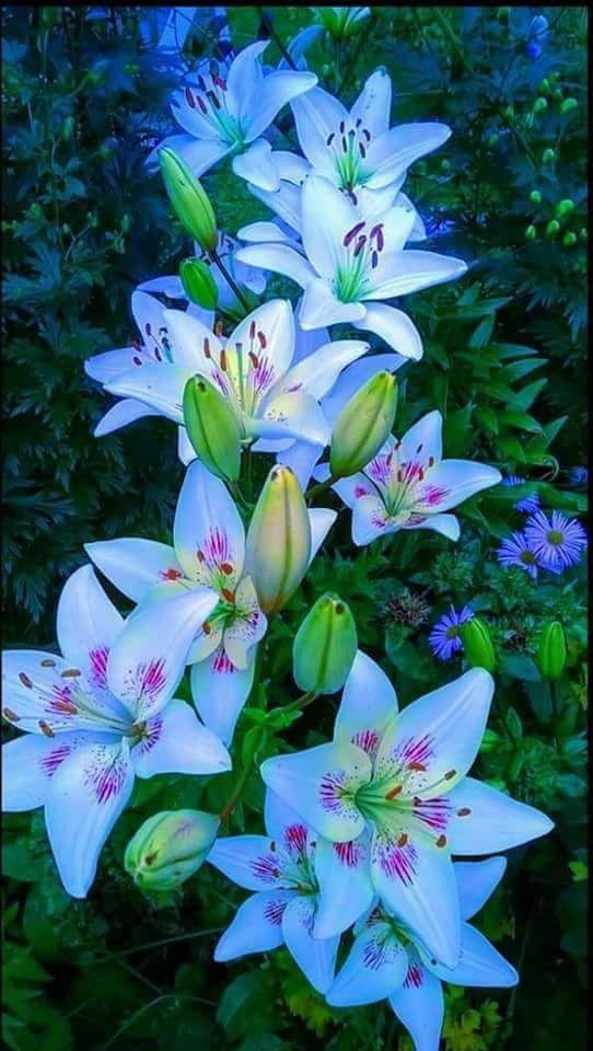 Pin von Nicolina auf Blumen | Pinterest | Er liebt mich, Ihn lieben ...