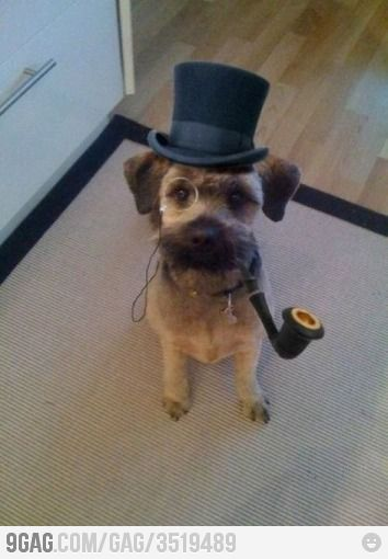 Excuse Me Sir Funny Dog Pictures Dog Wear Border Terrier