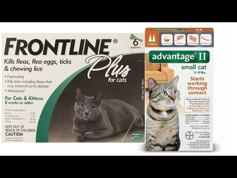Top 5 Best Flea Medicine For Cats Reviews Best Way To Get Rid Of
