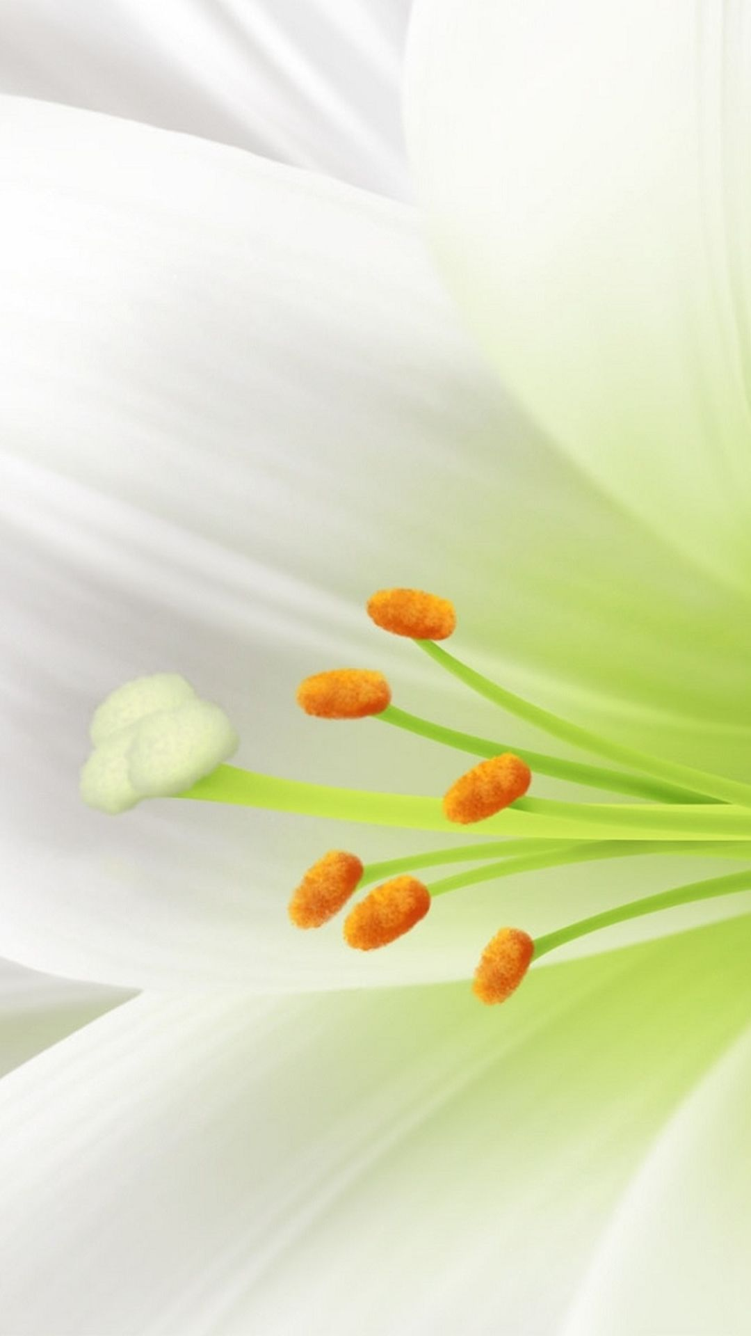 Fall Cell Phone Wallpaper Pure White Lily Flower Macro Iphone 6 Plus Wallpaper