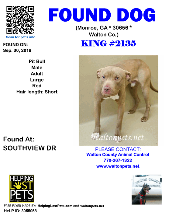 Pin on 2019 Dogs found in
