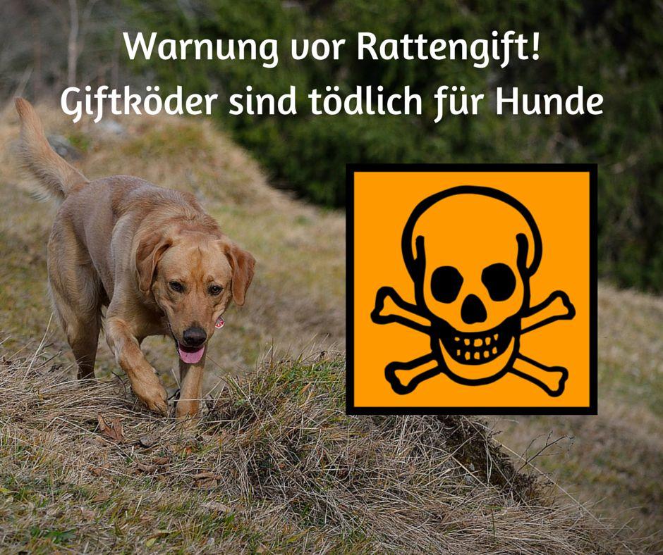 Vorsicht vor #Rattengift als tödliche #Giftköder mit verzögerter Wirkung, Sofort mit dem #Hund zum Tierarzt!