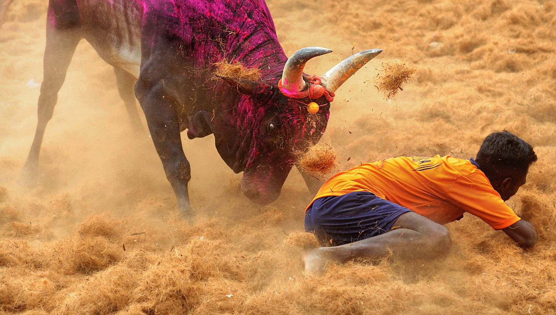 Jallikattu is believed to have been practiced since ancient times evidences have been traced through the ancient cave paintings near madurai tamil nadu