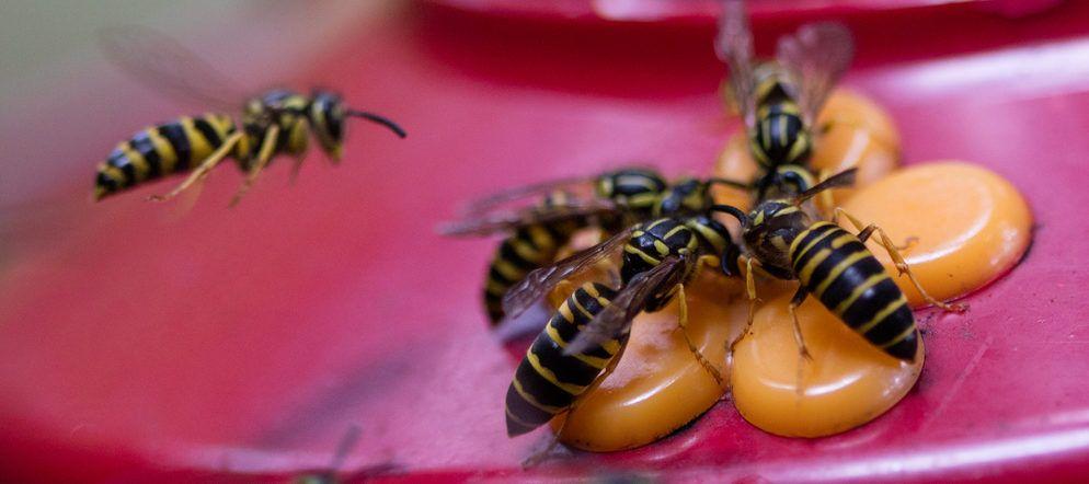 7 ways to keep bees off your hummingbird feeders bird